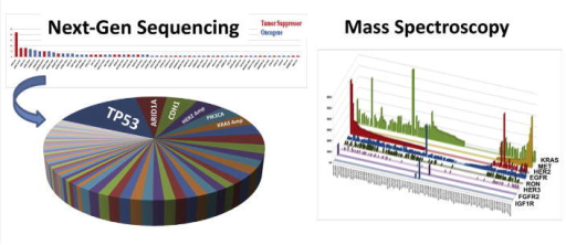 Inter–patient tumor molecular heterogeneity. (A) Genomic profiling using a ~240 gene next-generation sequencing (NGS) platform of a cohort of 50 stage IV GEC samples (upper panel) revealing few high frequency events (peak) and numerous low frequency events (tail); pie chart revealing profound inter-patient molecular heterogeneity (see Table 3). (Catenacci et al., 2014a) (B) Proteomic expression profiling of 100 GEC samples using multi-plex (8 peptides shown) selected reaction monitoring (SRM) mass spectrometry (MS) revealing clear inter-patient heterogeneity. (Catenacci et al., 2014a,b; Hembrough et al., 2012).