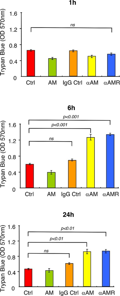αAM and αAMR increase endothelial cell permeability in vitroModification of endothelial cell permeability of αAM and αAMR-treated HUVEC monolayers was assessed as described in Materials and Methods at the indicated time points. Results of three independent experiments in triplicate are presented. Values are means ± SEM. Where indicated, statistical analysis was performed with 1-way ANOVA followed by PLSD test, and the level of significance was set at P < 0.05.