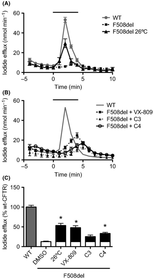 Functional assessment of F508del-CFTR rescue by C3, C4, and VX-809 in BHK cells. Iodide efflux from BHK cells stably expressing wt- or F508del-CFTR was measured directly or (F508del-CFTR cells) after low temperature (26°C, 48 h) incubation (A) or (F508del-CFTR cells) after treatment with 6.7 μmol/L C3, 10 μmol/L C4, 3 μmol/L VX-809 (B). Cells were stimulated with Forskolin (10 μmol/L) and Genistein (50 μmol/L) in the period indicated by the black solid line above graph of time course iodide efflux measurements. (C) Graph summarizing data of I− efflux peak magnitude generated by the different treatments of BHK F508del-CFTR cells expressed as a percentage of wt-CFTR activity. For F508del cells, the white bar corresponds to the efflux elicited by DMSO and the black bars to the increase promoted by each treatment. Data are mean ± SEM at each point (n = 4–6). Where error bars are not visible, the symbol has obscured them. *P < 0.05 relative to F508del-CFTR cells under DMSO (37°C).