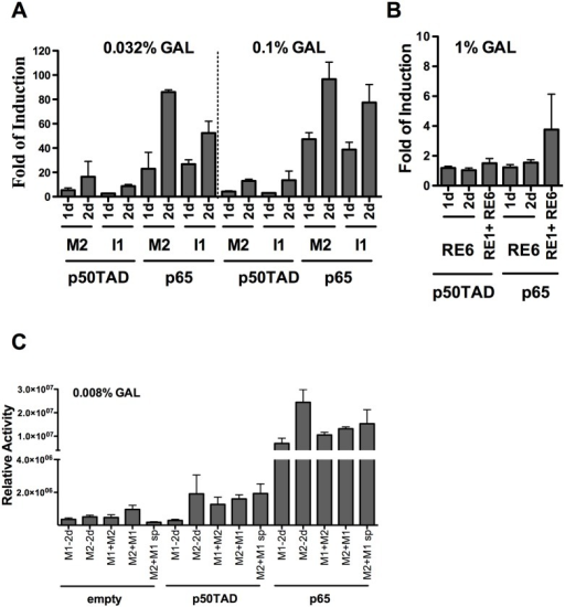 Additive or weak cooperative transactivation between adjacent κB REs.A) Yeast-based luciferase assays were performed at moderate to high expression levels of p50TAD or p65. Results were normalized and plotted as in Fig 1. The impact of tandem duplication (2d) of the decameric (1d) κB-RE or the indicated combination of two different κB-REs was evaluated. The REs were chosen based on the results from Fig 1 to include sequences exhibiting different levels of transactivation potentials. B) RE1 and RE6 were inactive as decameric κB-REs and there was no transactivation for two decamers in tandem or high expression of NF-κB proteins (up to 1% galactose). C) Functional interactions between two different κB-REs derived from the MCP-1 promoter. The M1 and M2 decameric κB-REs exhibited different responsiveness to p50TAD and p65, when examined separately, but are both derived from the MCP-1 promoter and they are located in close distance (19 nucleotide spacer) in the natural context. The combined responsiveness of the M1 and M2 κB-REs was examined, taking into account the impact of the distance between the two decamers and orientation relative to the transcriptional start site. Tandem repeats of M1 or M2 were included as controls. Yeast reporter strains, transformed with the indicated expression vector were cultured for 16 hrs with the indicated low amount of galactose. Relative activity refers to the average light units normalized for cell number (measured by optical density at 600nm). Average and standard error of four biological repeats are presented. The NF-κB-independent reporter activity (empty vector) is also presented as reference. Interestingly, the M2+M1 strains exhibited higher basal level of reporter expression. The M1+M2 sp strain contains the M1 and M2 κB decamers separated by 18 nt as in the human gene (see Table A in S1 File).