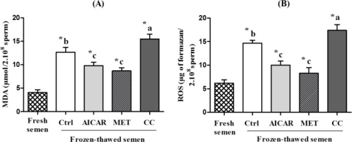 Effect of AMPK inhibitor CC and activators AICAR and MET on ROS and lipid peroxidation (MDA) in frozen-thawed chicken sperm.Sperm were treated in the presence of an AMPK activator (2mM AICAR (in light gray) or 1mM MET (in diagonals)) or an AMPK inhibitor (5µM CC (indark gray)) or Control (Ctrl, in white); Fresh semen (checkered pattern). (A) Lipid peroxidation (malondialdehyde), (B) Reactive oxygen species (ROS).Values represent means ± SEM from 6 different experiments (4 samples/experiment). Different superscripts indicate significant differences between Ctrl and treatments (AICAR, MET or CC) in frozen-thawed semen (a,b,c, P<0.01). Asterisks indicate statistically significant differences between fresh and frozen-thawed semen (*, P<0.001).
