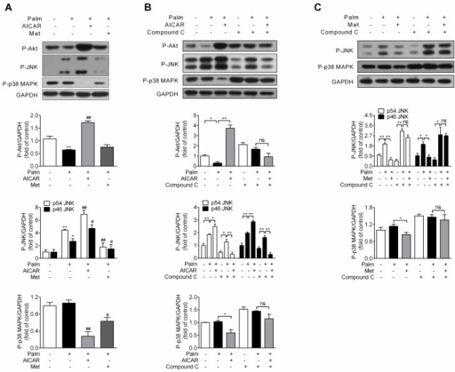 Effects of AICAR and metformin on Akt, JNK and p38 MAPK phosphorylation in palmitate-challenged INS-1E cells. (A) INS-1E cells were exposed to 0.25 mM palmitate with or without 1 mM AICAR or 2 mM metformin for 16 h, followed by immunoblotting of Akt, JNK and p38 MAPK phosphorylation. (B, C) INS-1E cells were preincubated with or without compound C (10 μM) for 30 min, and then exposed to 0.25 mM palmitate with or without 1 mM AICAR (B) or 2 mM metformin (C) for 16 h, followed by immunoblotting of Akt (only for AICAR), JNK and p38 MAPK phosphorylation. Representative immunoblots were shown and protein contents were quantified separately from three or four independent experiments. *P<0.05 and **P<0.01 vs control (cells exposed to 0.25% BSA) or corresponding columns as indicated; #P<0.05 and ##P<0.01 vs cells exposed to 0.25 mM palmitate. Palm, palmitate; Met, metformin.