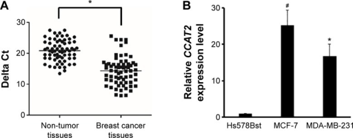 CCAT2 is upregulated in breast tumors.Notes: (A) The CCAT2 expression levels in breast cancer samples were significantly higher than those in adjacent non-tumor tissues by RT-qPCR assay. GAPDH was used as an internal control. (B) Higher expression levels of CCAT2 were detected in MCF-7 and MDA-MB-231 cells than in normal Hs578Bst cells by RT-qPCR assay. GAPDH was used as an internal control. The experiments were all repeated at least three times. *P<0.05 vs the control, #P<0.01.Abbreviations: RT-qPCR, reverse transcription quantitative polymerase chain reaction; GAPDH, glyceraldehyde-3-phosphate dehydrogenase.