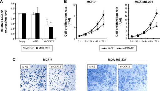 Suppressing CCAT2 expression decreases cell proliferation and invasion in vitro.Notes: (A) The transfection efficiency of si-CCAT2 in MCF-7 and MDA-MB-231 cells were indicated by RT-qPCR compared with cells transfected with si-NS. (B) An MTT assay was performed to investigate the effects of si-CCAT2 on cell proliferation in MCF-7 and MDA-MB-231 cells. The data showed that si-CCAT2 inhibited the cell growth of breast cancer cells. (C) A transwell assay was performed to investigate the effects of si-CCAT2 on cell invasion in MCF-7 and MDA-MB-231 cells. The data showed si-CCAT2 inhibited the invasion of breast cancer cells. The experiments were all repeated at least three times. *P<0.05 vs the control.Abbreviations: RT-qPCR, reverse transcription quantitative polymerase chain reaction; h, hour(s); si-CCAT2, siRNA specifically targeting CCAT2; si-NS, nonspecific siRNA; si-NS, scram bled nucleotide used as the negative control.