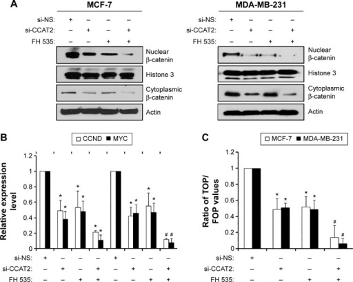 Suppressing CCAT2 expression affects the Wnt/β-catenin signaling pathway.Notes: (A) A Western blot assay was performed to detect the β-catenin content in the nucleus and cytoplasm of MCF-7 and MDA-MB-231 cells treated with CCAT2 siRNA or Wnt signaling inhibitor FH 535 (10 μM) for 48 hours. The data showed that si-CCAT2 inhibited the β-catenin expression at transcriptional level. Histone 3 was used as an internal control for nuclear protein and actin was used as the control for cytoplasm protein. (B) The CCND1 and c-myc expression levels were detected by a RT-qPCR assay. The MCF-7 and MDA-MB-231 cells were treated with si-CCAT2 or 10 μM FH 535, alone or combined, for 48 hours. GAPDH was used as an internal control. (C) TOP/FOP Flash detection system was used to investigate the effects of si-CCAT2 or FH 535, alone or combined, on Wnt/β-catenin in MCF-7 and MD-MB-231 cells. The data showed si-CCAT2 inhibited the β-catenin transcriptional activity. The experiments were all repeated at least three times. *P<0.05, and #P<0.001 vs the control.Abbreviations: RT-qPCR, reverse transcription quantitative polymerase chain reaction; si-CCAT2, siRNA specifically targeting CCAT2; GAPDH, glyceraldehyde-3-phosphate dehydrogenase; si-NS, nonspecific siRNA.