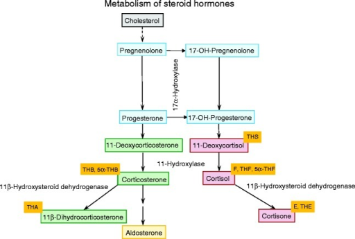 Schematic flow diagram representing the steroid hormone | Open-i