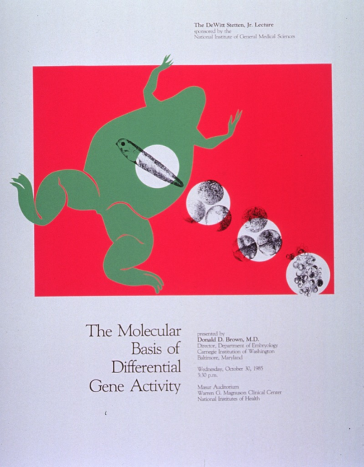 <p>White poster with black lettering announcing lecture by Donald D. Brown, M.D.  Also lists sponsor, Brown's affiliation, date, time, and location.  Central image on poster is a lime-green frog atop a fuchsia rectangle.  Four white circles extend on a diagonal from lower right corner of rectangle to frog's body.  Circles show black line drawings illustrating progression from cells to eggs to tadpole.</p>