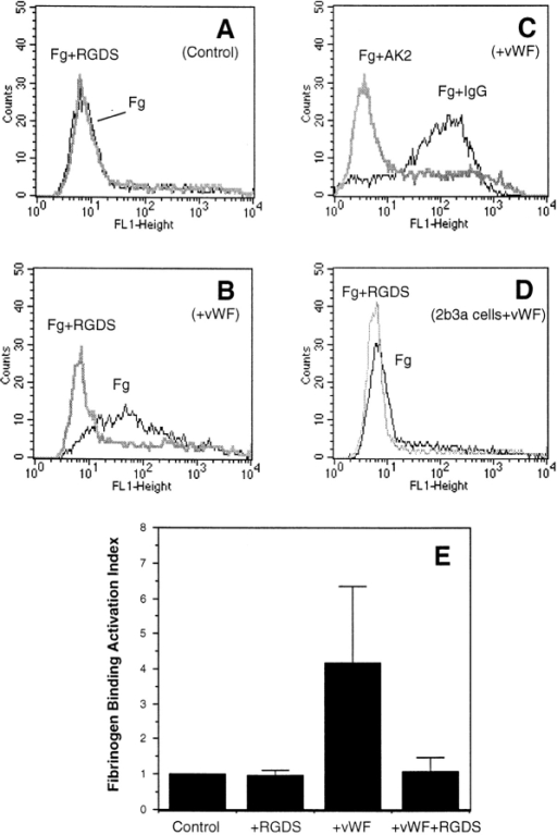 GPIb-IX–induced soluble fibrinogen binding to integrin αIIbβ3. (A) Cells expressing both GPIb-IX and integrin αIIbβ3 (123 cells) were incubated with FITC-labeled fibrinogen (15 μg/ml) and 1 mg/ml ristocetin in the absence (Fg) or presence of RGDS peptide (Fg+RGDS). (B) 123 cells were incubated with FITC-labeled fibrinogen, ristocetin, and 20 μg/ml purified human vWF in the absence of RGDS (Fg) or in the presence of RGDS (Fg+RGDS). (C) Control mouse IgG or a monoclonal antibody against GPIbα, AK2, were added to 123 cells. The cells were then incubated with FITC-labeled fibrinogen, ristocetin and vWF. Note that the increased binding of fibrinogen in the presence of vWF was inhibited by RGDS and by AK2. (D) 2b3a cells expressing αIIbβ3 only were incubated with FITC-labeled fibrinogen, vWF and ristocetin. Cells in A–D were analyzed for fibrinogen binding by flow cytometry. (E) 123 cells were incubated with FITC-labeled fibrinogen in the presence of ristocetin only (Control), ristocetin and RGDS (+RGDS), ristocetin and vWF (+vWF), or ristocetin, vWF and RGDS (+vWF+RGDS) at 22°C for 30 min and examined for fibrinogen binding as described in A. Activation of fibrinogen binding was quantitated and expressed as an activation index which is the ratio of the fluorescence intensity (Geo mean) of sample cells over the fluorescence intensity (Geo mean) of the control 123 cells (not stimulated with vWF). Shown in E are the results of 4 experiments (mean ± SD). Student's t test revealed that the difference between control and vWF-stimulated (+vWF) fibrinogen binding is highly significant (P < 0.001).