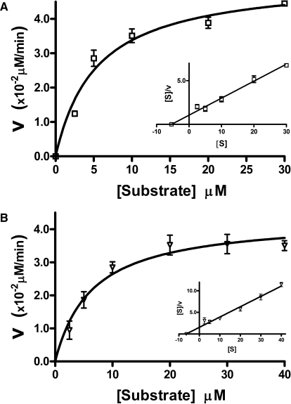 Kinetics of AlkB for DNA with 1mA. (A) Initial reaction velocities of AlkB (V) with SS DNA oliogonucleotide containing a single 1mA as a function of substrate concentration [S]. Mean and standard deviation from three or more separate identical reactions are shown. (B) Similar data with DS substrate containing a single 1mA. Inset—the data re-plotted with [S]/V as a function of [S].