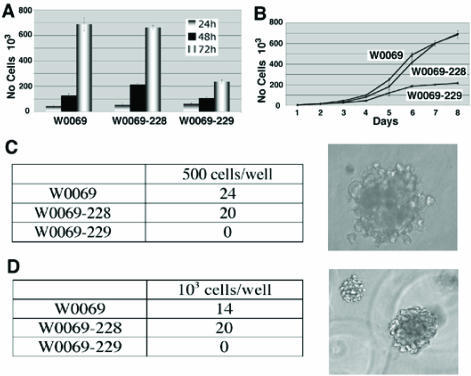 CD24+CD29+ cells affect characteristics of cancer cell lines including proliferation and anchorage-independent growth. (A) W0069, W0069-228, and W0069-229 cells were grown for 72h and cell proliferation was assessed by MTT assay at 24h, 48h and 72h, respectively. (B) 5x104 cells for each cell line were grown in 6 well plates. Every 24h cells were collected and the number of cells was measured by using Z1 Coulter counter up to 8 days. (C, D) cells were grown either in soft agar (C) or in matrigel (D), respectively. Numbers represent the number of colonies in one out of three independent experiments. Characteristic pictures of colonies in both soft agar and matrigel are shown on the right.