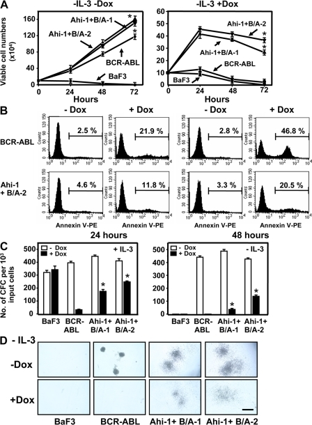 Overexpression of Ahi-1 rescues growth suppression induced by the inhibition of BCR-ABL expression in BCR-ABL–inducible BaF3 cells. (A) Growth of control BaF3, BCR-ABL–inducible cells, and two Ahi-1–transduced, BCR-ABL–inducible clonal lines without IL-3 ± Dox (+Dox = suppression of BCR-ABL expression). Viable cell numbers were determined by hematocytometer counts of trypan blue–excluding cells. (B) Annexin V-PE/7-AAD staining of BCR-ABL–inducible cells and Ahi-1–transduced BCR-ABL–inducible cells (Ahi-1 + B/A-2) after culture without IL-3 ± Dox for 24 and 48 h. Percentages of Annexin V+ cells are indicated. (C) CFC colonies produced in semisolid media ± IL-3 and Dox from the same cells as shown in A. (D) The appearance of GF-independent CFC colonies in Ahi-1 and BCR-ABL–cotransduced cells without IL-3 ± Dox. Bar, 250 μm. Values shown are the mean ± SEM of triplicate measurements. * indicates significant difference between BCR-ABL inducible cells alone and inducible cells cotransduced with Ahi-1.
