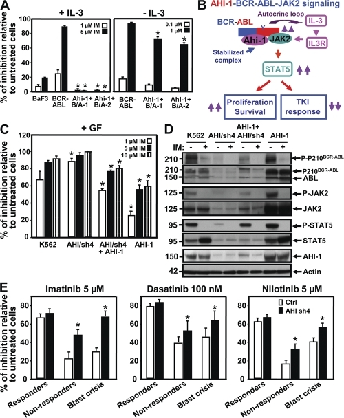 AHI-1 mediates response/resistance of TKIs as assessed by overexpression or suppression of AHI-1 in BCR-ABL+ primitive CML cells. (A) Percentage of inhibition of CFC colonies generated in semisolid media ± IL-3 and IM (0–5 μM) from control BaF3, BCR-ABL–inducible cells, and two Ahi-1–transduced BCR-ABL–inducible clonal cell lines. (B) Model of AHI-1–BCR-ABL–JAK2 complex regulation of constitutive activation of BCR-ABL and JAK2–STAT5 pathway, resulting in increased proliferation and reduced TKI response of CML stem/progenitor cells. (C) Percentage of inhibition of CFC generation in semisolid media with GF and IM (0–10 μM) from control K562, AHI/sh4–transduced cells (suppression of AHI-1), overexpression of AHI-1 in AHI/sh4 cells, and AHI-1–transduced K562 cells. * indicates significantly different from K562 control cells. (D) Western analyses of cell lysates from the same cells ± IM (5 μM) for 6 h. Antibodies used are indicated. (E) Inhibition of CFCs in semisolid media with IM (5 μM), DS (100 nM), and NL (5 μM) in lin−CD34+ CML cells from IM responders (n = 3), nonresponders (n = 3), and blast crisis (n = 3) patient samples transduced with either a control vector or AHI-1/sh4 vector. Values shown are the mean ± SEM of triplicate measurements. * indicates significantly different between BCR-ABL–inducible cells and inducible cells cotransduced with Ahi-1, and between lin−CD34+ cells transduced with a control vector or transduced with the AHI-1/sh4 vector.