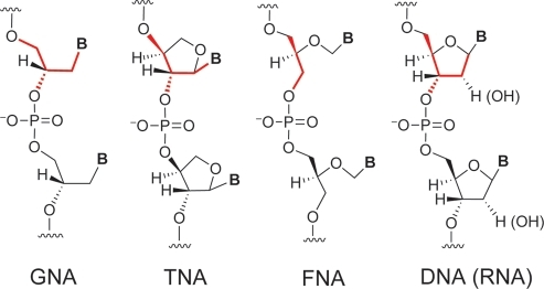 Structures of GNA, TNA, FNA, and DNA (RNA).The backbone similarity is highlighted in red.