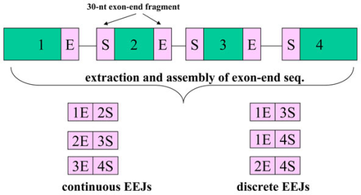 Collection of exon-exon junctions. By our definition, the EEJs can be continuous or discrete. The former represent known alternative splicing products. The latter, however, represent novel alternative splicing isoforms.