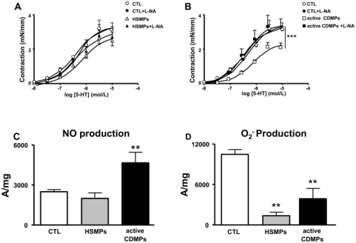 Microparticles (MPs) from active CD patients induce nitric oxide (NO) overproduction in mouse aorta.Concentration-effect curves of 5-HT in the presence and in the absence of L-NA in aortic rings isolated from mice injected in vivo with vehicle (controls (CTL)) and MPs from HS (HSMPs) (A) and with MPs from active CD patients (active CDMPs) (B). Contraction are expressed in mN/mm. Results are given as mean ± SEM (n = 7–8). NO production (C) assessed by the amplitude of NO-Fe(DETC)2 complex signal and superoxide anion (O2−) production (D) assessed by the amplitude of O2–CMH complex signal in unit/weight in aorta from mice injected in vivo with vehicle (CTL), HSMPs and active CDMPs. Results are given as mean ± SEM (n = 5–7). **p<0.01; ***p<0.001 vs CTL.