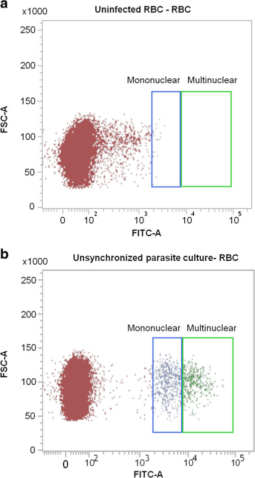 Comparison of parasitized and uninfected blood using the SYBR Green flow cytometric assay. Scatterplots from synchronised (a) uninfected and (b) infected cultures showing the gating strategy that enables the differentiation of mononuclear (ring/trophozoite) and multinuclear (schizont) parasite stages.