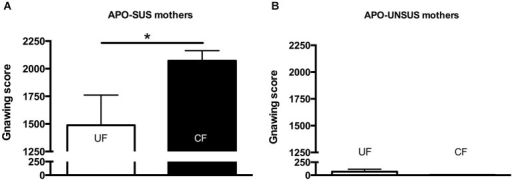Apomorphine-induced gnawing of APO-SUS (A) and APO-UNSUS (B) mothers after fostering their own pups (white bars) or fostering pups from their phenotypic counterpart (black bars). * p < 0.05.