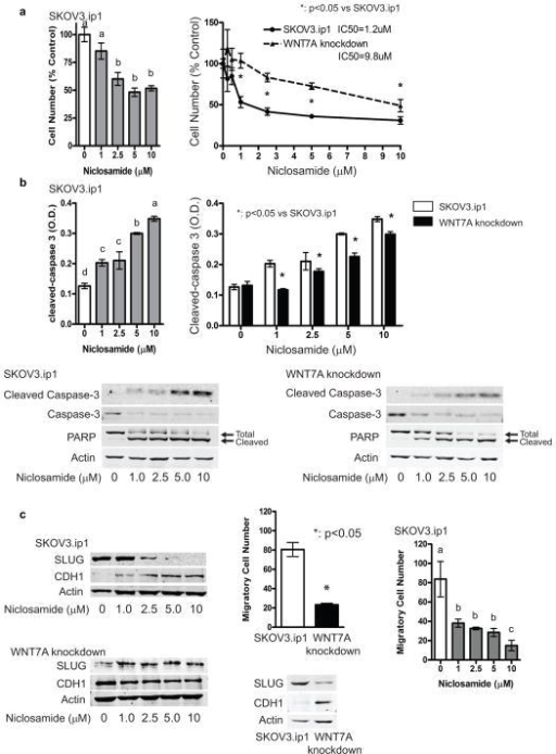 Niclosamide Effectively Inhibits Ovarian Cancer Cell Fu Open I