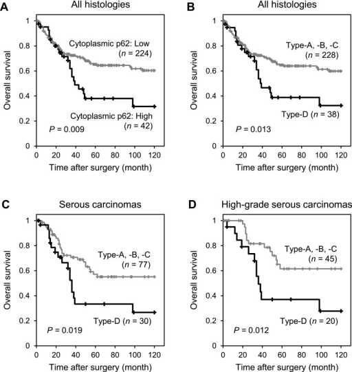 Prognostic implication of the p62 expression status in epithelial ovarian cancer. A. Overall survival curves of all 266 patients with epithelial ovarian cancer (EOC) according to the expression level of cytoplasmic p62. This figure shows survival curves for 42 patients with high cytoplasmic p62-expressing tumors and for 224 patients with low cytoplasmic p62-expressing tumors. The two curves differ significantly. B. Overall survival curves of all 266 patients with EOC according to the p62 expression subtypes. This figure shows the survival curves for 38 patients with Type-D tumors (high expression of cytoplasmic p62 and low expression of nuclear p62; CytoHigh/NucLow) and for 228 patients with Type-A, -B, or -C tumors (CytoLow/NucLow, CytoLow/NucHigh, or CytoHigh/NucHigh, respectively). The two curves differ significantly. C. Overall survival curves of 107 patients with serous carcinoma according to the p62 expression subtypes. This figure shows the survival curves for 30 patients with Type-D tumors and 77 patients with Type-A, -B, or -C tumors. The two curves differ significantly. D. Overall survival curves of 65 patients with high-grade serous carcinoma according to the p62 expression subtypes. This figure shows the survival curves for 20 patients with Type-D tumors and 45 patients with Type-A, -B, or -C tumors. The two curves differ significantly.