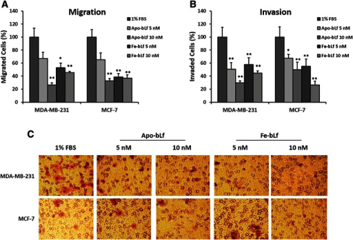Effect on migration and invasion capacity of MDA-MB-231 and MCF-7 cells after treatment with bLf. Migration of MDA-MB-231 and MCF-7 (a) cells after bLf treatments for 24 h represented as a percentage of untreated (1% FBS) control migration. Invasion of MDA-MB-231 and MCF-7 cells (b) after bLf treatments for 24 h represented as a percentage of untreated (1% FBS) control invasion. * = p < 0.05 compared with 1% FBS group. Representative images (250X magnification) of invaded cells stained with crystal violet (c)