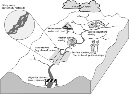 Local abiotic habitat conditions and river biota are affected by pressures at different spatial scales that potentially constrain reach-scale biota and restoration.