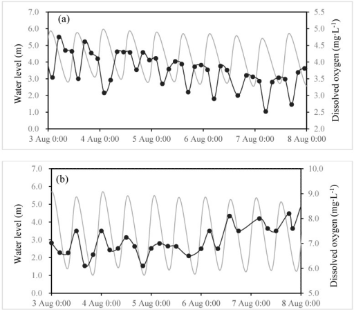 Temporal evolutions of the water level (mg·L−1—grey) and DO (mg·L−1—black) contents at Wenshanli (a) and Baiyantan (b) from 3–8 August 2012. Data frequency was three hours.