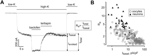 Basal and agonist-evoked GIRK currents in neurons and oocytes are inversely related.(A) A representative whole-recording of GIRK current in a neuron. Switching from low-K+ extracellular solution to a high-K+ solution led to the development of a large inward current probably carried by several ion channel types. Addition of baclofen elicited Ievoked. Arrows show the amplitudes of Ibasal, Ievoked and Itotal. Extent of activation, Ra, is defined as Itotal/Ibasal. (B) Inverse correlation between Ibasal and Ra in oocytes and neurons. To allow direct comparison of Ibasal in oocytes and neurons, currents in neurons were corrected for the 10 mV difference in holding potential, which was -70 mV in neurons and -80 mV in oocytes (see Methods). The correlation between Ra and Ibasal was highly significant, p = 0.000000028 (neurons; n = 60; correlation coefficient = -0.633) and p = 0.0000002 (oocytes; n = 272; correlation coefficient = -0.728) by Spearman correlation test.