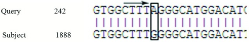 Alignment of the HBV Pre-Core RegionThe Arrow Indicates A Mutation in the Sample, Which Created an Unwanted Stop Codon