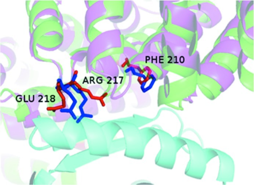 The complex between the core domain of HspBP1 and the Hsp70 ATPase domain, an example of the change in the position of interface residues (stick representation; red in the B form and blue in the U form). Protein chains are shown in cartoon representation in green for the B form (PDB entry 1xqs) and in pink for the U form (PDB entry 1xqr) of the core domain of HspBP1 (Shomura et al., 2005 ▸) containing the labelled interface residues; the other component (the Hsp70 ATPase domain) in the B form is shown in cyan. ΔASA = −175 Å2 and δA = −10%. The ΔASA values for the interface atoms of the residues shown are −43 Å2 for Arg217, −20 Å2 for Glu218 and −16 Å2 for Phe210.