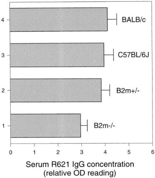 Serum anti-mBP180 IgG levels in β2m−/− mice after intradermal injection. Neonatal β2m−/− (bar 1), β2m+/− (bar 2), C57BL/6J (bar  3), and BALB/c (bar 4) mice were injected intradermally with 2.5 mg/g  body weight anti-mBP180 IgG and serum samples were collected 12 h after injection and assayed for rabbit IgG by ELISA. n = 5 for each point.