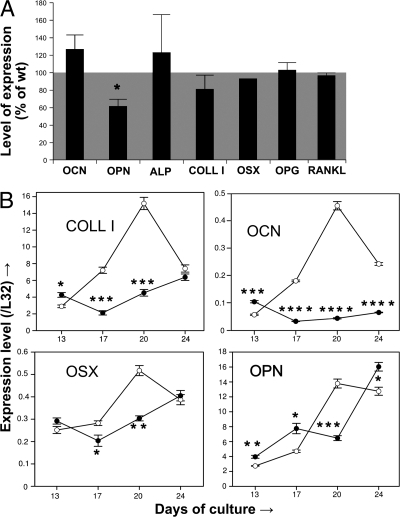 In vivo and in vitro effects of BSP deletion on osteoblast marker expression. (A) Real-time PCR analysis of osteocalcin (OCN), OPN, tissue nonspecific alkaline phosphatase (ALP), type I collagen (COLL I), osterix (OSX), osteoprotegerin (OPG), and receptor-activator of NF-κB (RANKL) mRNA expression in femurs of 4-mo-old male BSP−/− mice. Values are the mean ± the SEM of 3–4 mice (except for OSX) normalized to housekeeping gene L32 and expressed as the percentage of WT levels. (B) Time course of expression of COLL I, OCN, OSX, and OPN mRNA as assessed by real-time PCR in bone marrow cultures of WT (empty symbols) and mutant (black symbols) mice, grown in osteogenic conditions. Values were normalized to time-matched levels of the housekeeping gene L32. *, P < 0.05; **, P < 0.01; ***, P < 0.001; ****, P < 0.0001 versus matched WT.