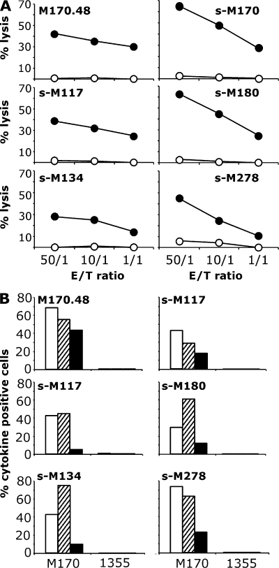 Reactivity of MELOE-1/A2–specific TILs against HLA-A2 tumor cell lines. (A) Lysis of the M170 melanoma cell line (closed circles) and of the 1355 lung carcinoma cell line (open circles) by the M170.48 CTL clone and MELOE-1–specific TIL populations. 51Cr-labeled tumor cells were co-cultured with T cells at various E/T ratios. Chromium release in the supernatants was measured after a 4-h incubation period. (B) Cytokine production by the M170.48 CTL clone and MELOE-1–specific TIL populations in response to M170 melanoma cells. Effector and target cells were incubated at a 1:2 ratio in the presence of Brefeldin A and stained with anti-TNF antibody (open bars), anti– IFN-γ antibody (hatched bars), or anti–IL-2 antibody (closed bars), and 104 T cells were analyzed by flow cytometry.