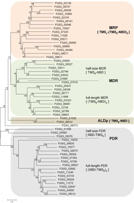 Molecular phylogeny of F. graminearum ABC transporters. The depicted phylogram was obtained by Neighbor-Joining using MEGA4 software and reflects the relationships between 54 amino acid sequences of putative ABC transporters that were extracted from the F. graminearum proteome. Results from bootstrapping with 1000 replicates are indicated when higher than 30%. Classification for subfamily uses a published nomenclature [26,27] and is indicated by colored boxes. ALDp, adrenoleukodystrophy protein; MDR, multi drug resistance proteins; MRP, multidrug resistance-associated proteins; PDR, pleiotropic drug resistance proteins; NBD, nucleotide-binding domain; TMS, transmembrane spanning domain.