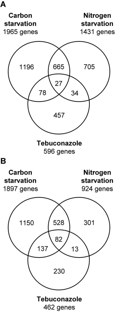 Comparison of differentially expressed genes exposed to different stress conditions. Venn diagrams illustrate results from comparative analyses of gene sets found differentially expressed by azole treatment, carbon, or nitrogen starvation [10]. A. Comparisons of gene sets showing significantly increased transcript levels. Nine of 596 genes found in the current tebuconazole study did not match a probe set on the Affymetrix GeneChip. B. Comparisons of genes sets showing significantly decreased transcript levels. Three out of 462 genes did not match a probe set on the Affymetrix GeneChip.