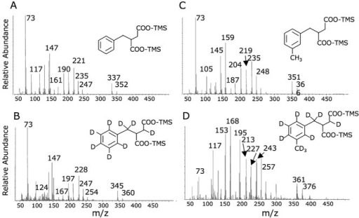 Mass spectral profiles of (A) authentic benzylsuccinic acid, (B) deuterated (d8) fumarate addition metabolite produced during the anaerobic decomposition of toluene‐d8 in laboratory incubations, (C) authentic m‐methylbenzylsuccinic acid and (D) deuterated (d10) fumarate addition metabolite produced during the anaerobic degradation of m‐xylene‐d10 in laboratory enrichments. Mass spectra and structures shown are of the trimethylsilylated derivatives analysed by GC‐MS.