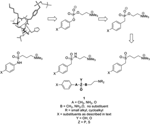 Design of small molecule analogues (SMAs) of ES-62 based upon atyrosyl-phosphoryl choline peptide.
