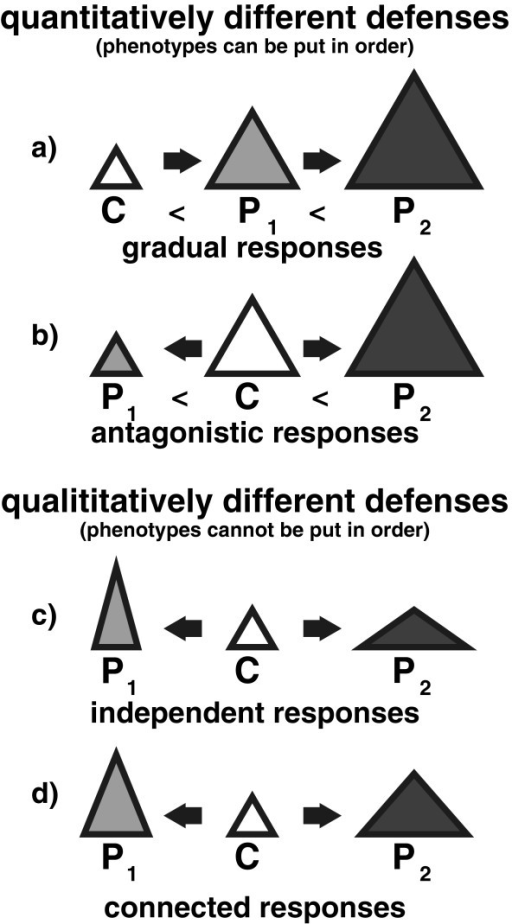 Distinction between quantitative (a, b) and qualitative differences (c, d) of inducible defenses. C (white) represents a non-induced morph, P1 (light gray) represents a morph defended against the predator 1 and P2 (dark gray) represents a morph defended against predator 2. The triangles, the square and the circle depict the phenotype. In the case of quantitative differences, the changes can be put in order in terms of an increase or decrease (represented by the different sizes of the triangles). This is true for both a) gradual responses (C <P1 <P2) and b) antagonistic responses (P1 <C <P2) In contrast, qualitative differences cannot be put in order in terms of an increase or decrease (represented by the different shapes of the triangles), as changes in different traits would lead to differently shaped phenotypes. This can either be the case, because a) independent changes occur (here: P1 gets higher than C and P2 gets wider than C, so for one trait (for example, width) it is C = P1 <P2 for the other trait (for example, height) it is C = P2 <P1), or b) because the changes to the traits occur to a different extent (here: P1 is higher than P2, but P2 is wider than P1, so for one trait (for example, width) it is C <P1 <P2 for the other trait (for example, height) it is C <P2 <P1).