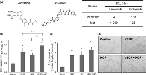 Effects of vascular endothelial growth factor (VEGF) and hepatocyte growth factor (HGF) on cell proliferation and tube formation of endothelial cells in vitro. (a) Chemical structure of lenvatinib (left panel), golvatinib (middle panel), and the inhibitory activity of compounds against vascular endothelial growth factor receptor 2 (VEGFR2) and Met (right panel). (b) HUVECs were incubated for 3 days in the presence of VEGF (20 ng/mL), HGF (30 ng/mL), or both. Cell numbers were quantified using the sulforhodamine B method. Data represent means ± SD. *P < 0.05 versus control; ** P < 0.05 versus the indicated group. (c) Quantification of HUVEC tube formation induced with VEGF, HGF, or both. The relative length of network was calculated relative to the control. Data represent means ± SD. *P < 0.05 versus control. (d) Representative images of tube formation induced by VEGF, HGF, or both.