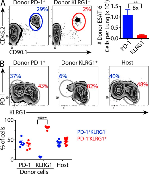 ESAT-6–specific PD-1+ CD4 T cells undergo a robust recall response. Mice were infected as described in Fig. 1. 5 mo after infection, PD-1+KLRG1− or PD-1−KLRG1+ CD4 T cells were purified by FACS from lungs of congenically marked donor mice and adoptively transferred (normalized for transfer of 5.5 × 104 ESAT-6 tetramer-binding cells/recipient) into uninfected WT mice. Recipients were challenged 10 d after transfer with Mtb and assessed 28 d after infection. (A) Flow cytometry plots depict the percentage of donor-derived cells (CD45.2+CD90.1+) within the ESAT-6 tetramer-binding CD4 T cell population in recipients receiving either PD-1+KLRG1− (left panel) or PD-1−KLRG1+ (right panel) cells. The bar graph shows the absolute number of donor-derived ESAT-6 tetramer-binding CD4 T cells in the lungs of mice that received PD-1+KLRG1− (blue) and PD-1−KLRG1+ (red) donor cells. (B) Flow cytometry plots depict PD-1 and KLRG1 expression by donor-derived (transferred as PD-1+KLRG1− or PD-1−KLRG1+ cells) and endogenous ESAT-6 tetramer-binding CD4 T cells in recipient lungs. The graph depicts the frequency of PD-1+KLRG1− (blue) or PD-1−KLRG1+ (red) cells within each donor-derived and endogenous ESAT-6 tetramer-binding population in individual mice. The mean ± SEM are shown for each group. Statistical significance was determined by two-tailed Student's t test. **, P < 0.01; ****, P < 0.0001. Data are representative of two independent experiments with five mice per group.