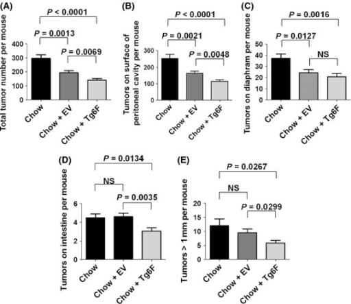 Both the control tomato concentrate (EV) and the tomato concentrate containing the 6F peptide (Tg6F) significantly reduced ovarian cancer cell tumor burden, but the tomato concentrate containing the 6F peptide was significantly more effective. Female C57BL/6J mice at age 9 weeks (n = 24 per group) were given an intraperitoneal injection containing 8 × 106 ID8 cells in a total volume of 0.8 mL of DMEM (without supplements). Following injection of the ID8 cells the mice were maintained on either standard mouse chow (Chow), or standard mouse chow containing 0.06% by weight of the control transgenic tomato concentrate (EV), or containing 0.06% by weight of the transgenic 6F tomato concentrate (Tg6F), which provided the mice with a dose of the 6F peptide of ∼7 mg/kg per day. After 12 weeks the mice were subjected to a terminal bleed, and after sacrifice the number of tumor nodules on peritoneal surfaces and on the surface of abdominal organs was determined as described in Materials and Methods. (A) The total number of tumor nodules in the abdomen. (B) The number of tumor nodules on the surface of the peritoneal cavity. (C) Number of tumor nodules on the diaphragm. (D) The number of tumor nodules on the surface of the intestine. (E) The number of tumor nodules in the abdomen that were greater than 1 mm in size. The data shown are mean ± SEM; NS, not significant. These results are representative of two of two experiments.