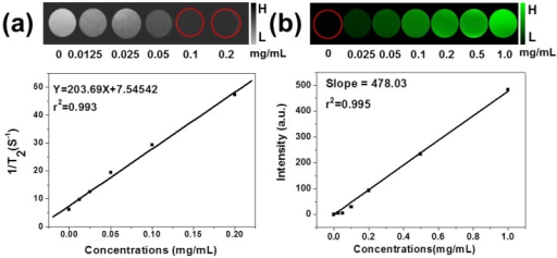 (a) In vitro T2-weighted MR images with different concentrations of Fe3O4 in MSIOs and T2 relaxation rates 1/T2 (r2) plot of different concentrations of Fe3O4 in MSIOs. (b) In vitro PAT images of MSIOs with different concentrations in a phantom gel container and plot of photoacoustic signal versus a series of concentrations of MoS2 in MSIOs.