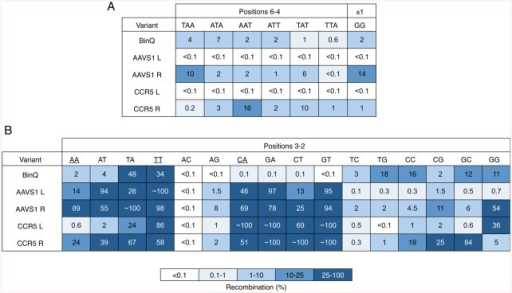 Specificity analysis of redesigned BinQ variants.Recombination by BinQ-CCR5 L and R, and BinQ-AAVS1 L and R on 20-Bin core sites containing (A) all posssible weak (W: A or T) substitutions within positions 6–4, or the dinucleotide core (±1) substitution GG and (B) all possible two-base combinations within positions 3–2. Recombination was determined by split gene assembly.