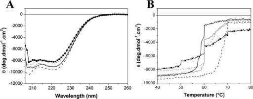 Far UV CD experiments of TtgRWT and variants in the absence of effectors.(A) Far UV CD spectra at 30°C. (B) Thermal unfolding of TtgRWT and mutants monitored by CD ellipticity at 222 nm. Variants are represented in grey line (TtgRWT), black solid line (TtgRH114A), black dashed line (TtgRN110A), black dotted line (TtgRE78A) and black squares and line (TtgRS77A).