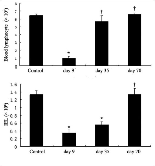 Depletion of lymphocytes in the peripheral blood and colon of cynomolgus monkeys by alemtuzumab treatment. The number of lymphocytes in blood and intestine epithelium was examined on day 9, 35 and 70 after treatment and in the control group. *P < 0.05 compared with control group; †P> 0.05 compared with control group.
