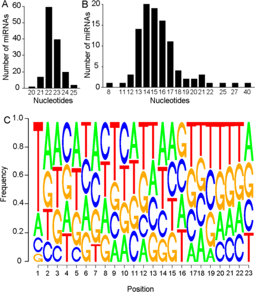 Properties of the miRNAs identified in Blattella germanica.(A) Length range of the mature miRNA sequence. (B) Length range of the loop of the miRNA precursor. (C) Sequence logo showing the proportion of each nucleotide in each position on the mature mRNA. In the mature miRNA, the most frequent nucleotide in the first position is Uracil (represented as T), whereas the other positions show similar frequencies of each one of the 4 possible bases.