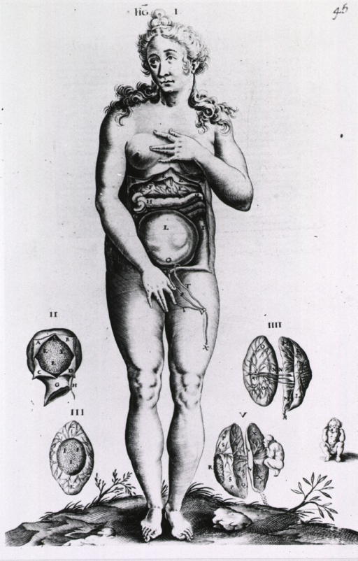 <p>Female anatomy figure, surrounded by vignettes of uterus in cross section.</p>