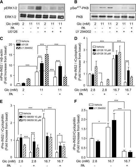 Inhibition of ERK1/2 pathway, but not PKB, partially pr