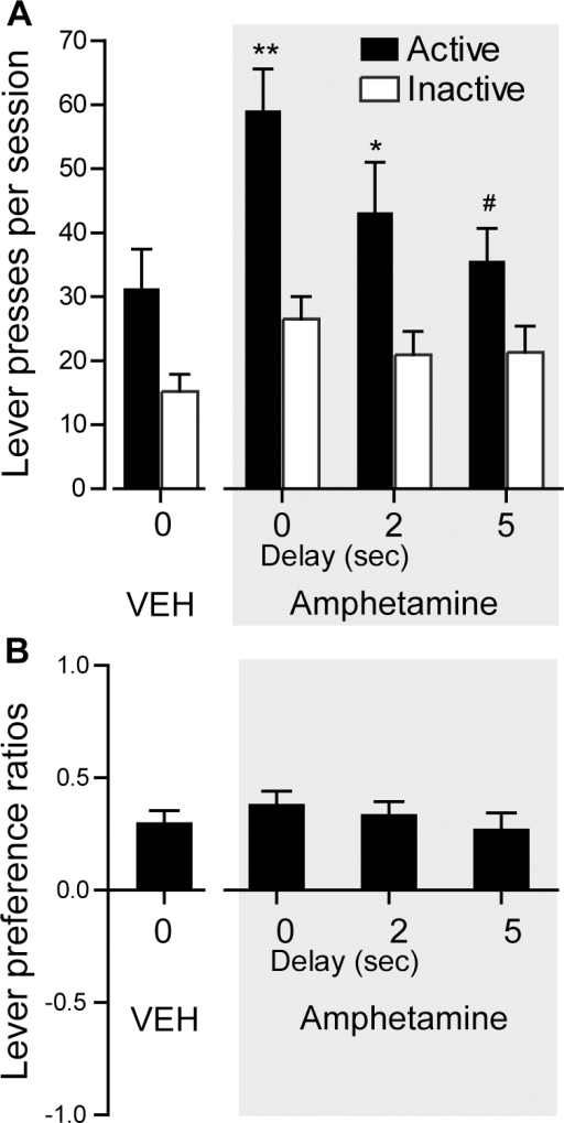 Effects of the delayed visual signal presentation upon lever pressing.Following a noncontingent vehicle (VEH) session, rats received noncontingent administration of amphetamine (30 mM; 78 nl per infusion) into the medial olfactory tubercle. The data (n = 13) are means with SEM. A. Delayed presentation of visual signals decreased active lever presses, while not reliably influencing inactive lever presses. ** P<0.001, significantly greater than its inactive lever presses and the active lever presses of the 2- and 5-sec delay sessions. * P<0.05, significantly greater than its inactive lever presses and the active lever presses of the 5-sec delay session. # P<0.001, significantly greater than its inactive lever presses. B. Lever preference ratios did not reliably differ as a function of delay.