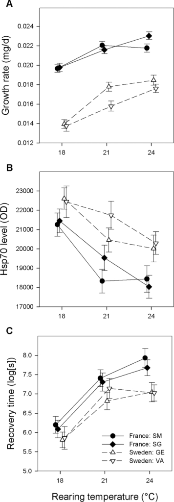 Differences in growth rate, Hsp70 level and chill coma recovery time                        between latitudes across temperatures.Mean (±1 SE) larval growth rate (A), and Hsp70 level (B) and chill                        coma recovery time (C) in the adult stage of Ischnura                            elegans from two northern and two southern populations at three                        rearing temperatures. Means are slightly offset to aid visualization. Hsp70                        levels and chill coma recovery times are quantified after a cold shock                        treatment (1.5 h exposure to 4°C) given to the freshly emerged                        adults.
