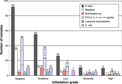 Total numbers of pigs positive for trichomonads and other pathogens. The X-axis shows trichomonad infections in different infestation degrees (scattered, low, moderate, high or not infected (Neg)); the bars stand for total number, not infected with one of the tested pathogens (negative), positive for Brachyspira sp., PCV-2, L. intracellularis or E. coli, respectively. Multiple infections are included in the amount of samples and not shown separately.